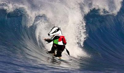 2017 blaireau maillot sur surf.jpg